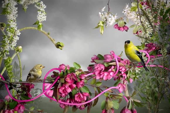 goldfinch_small